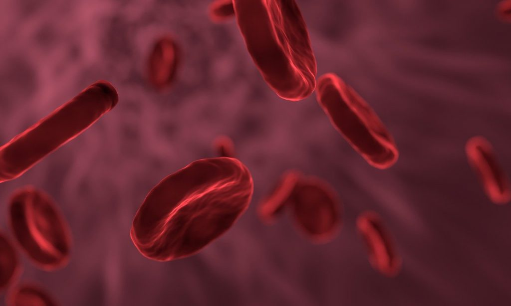 red blood cells, microbiology, biology